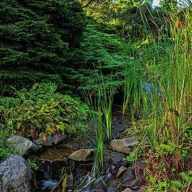 Tiny Creek by Denise Harty