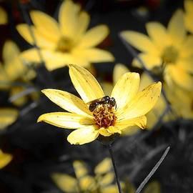 Tiny Pollinator by Carmen Macuga