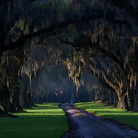 Tomotley Avenue of Oaks