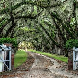 Tomotley Plantation, South Carolina by Harriet Feagin