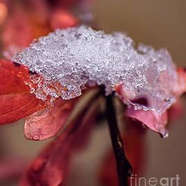Tones Of Winter by Susan Warren