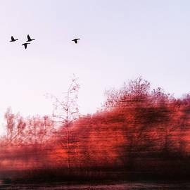 Jaroslav Buna - Touch of Nature