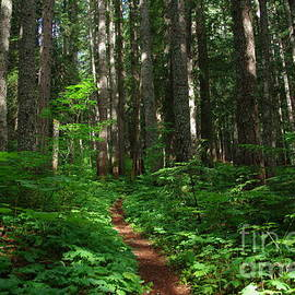 Trail in deep forest by Jeff Swan