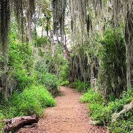 Trail In The Wilderness by Debra Martz