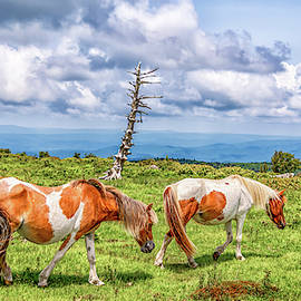 Trail Of Ponies by Chris Coffee