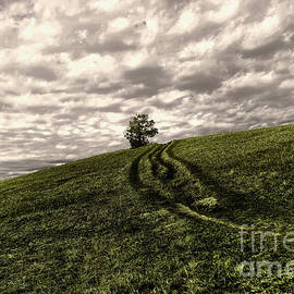 Trail to a tree by Jeff Swan