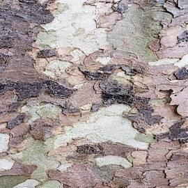 Tree Bark 2 by Rob Hans