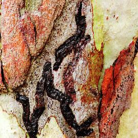 Aussie Gum Tree Bark - 41 by Lexa Harpell