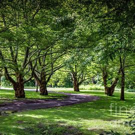 Tree Canopy by William Norton