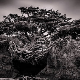 Tree Cave 1 by Mike Penney
