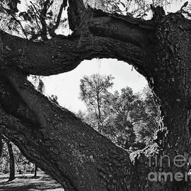 Tree Frame by D Hackett