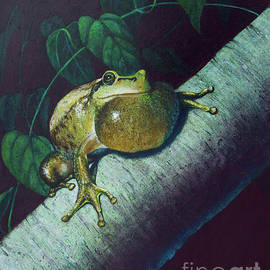Tree Frog by Rob Corsetti
