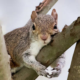Tree Hugger Squirrel by Terry DeLuco