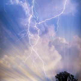 Tree in a Lightning Storm by Debra and Dave Vanderlaan