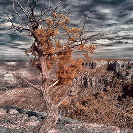 Tree in Grand Canyon Infrared by Norman Gabitzsch