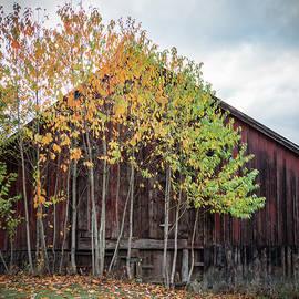 Tree Line by Jean Noren