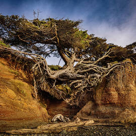 Tree Root Cave by Mike Penney