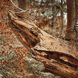 Tree Shark Abstraction by Bill Swartwout Fine Art Photography