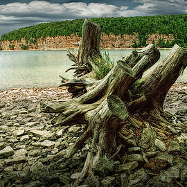 Tree Stump at Fayette Michigan State Park in the Upper Peninsula by Randall Nyhof