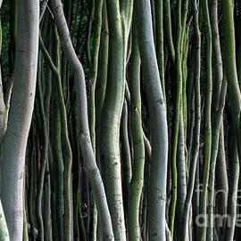 Tree Trunks by Arterra Picture Library