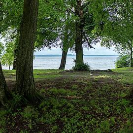 Trees At The Beach Of Lake Kisajno by Dubi Roman