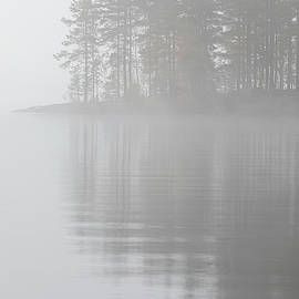 Trees reflection at lake foggy morning by Juhani Viitanen