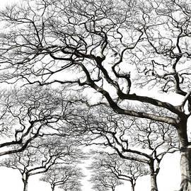 Trees With No Leaf by Kazunori Nagashima