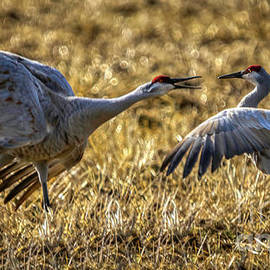 Trespassing Sandhill Crane by Janice Pariza
