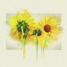Trio Of Sunflowers by R christopher Vest
