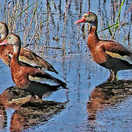 Trio of Whistlers by HH Photography of Florida