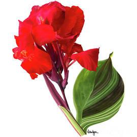 Tropical Bouquet-flower Three by Kandyce Waltensperger