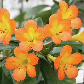 Tropical Rhododendron Dwp101311001 by Dean Wittle