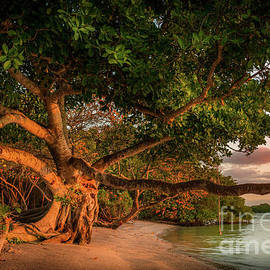 Tropical Tree at North Jetty in Venice, Florida by Liesl Walsh