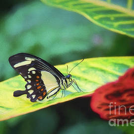 Tropical Wings by Sharon McConnell