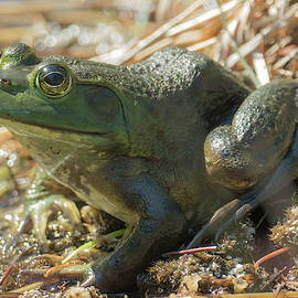 True Frog by Sally Sperry