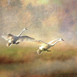 Trumpeter Swan Landing - painterly by Patti Deters