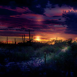Tucson - After the monsoon by Micah Offman
