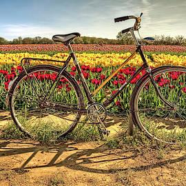 Tulip field forever  by Geraldine Scull