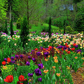 Tulip Garden 014 by George Bostian