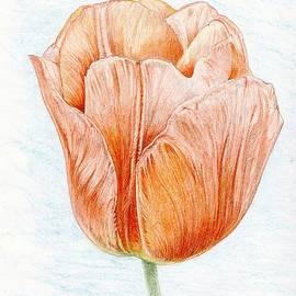Tulip In Peach by Jason Girard