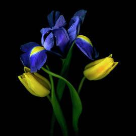 Tulips Tulipa With Irises Iris On Black by Magda Indigo