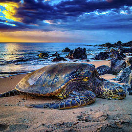 Turtle Nap by Pono Images by Dave Fish