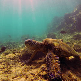 Turtle on the Rocks by Anthony Jones