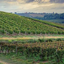 Tuscan Vineyard Early Morning by Joan Carroll