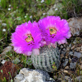 Twin Blooms by Bill Morgenstern