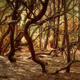 Twisted Oaks by MM Anderson