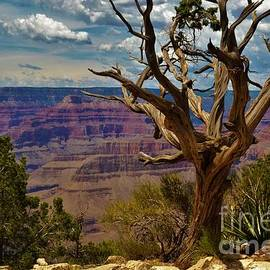 Twisted Tree at the Canyon by Suzanne Wilkinson
