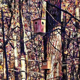 Two Birdhouses In The Autumn Woods by Susan Savad