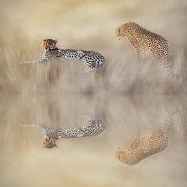 Two Cheetahs by Donna Kennedy