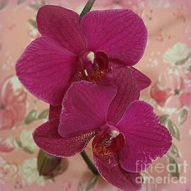 Two Victorian Orchids by Dora Sofia Caputo Photographic Design and Fine Art